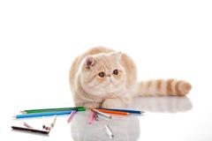 Katt med blyertspennor som isoleras på det vita bakgrundshusdjuret i lärande process Arkivfoton