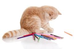 Katt med blyertspennor som isoleras på vita bakgrundsfärgpennor Royaltyfri Bild