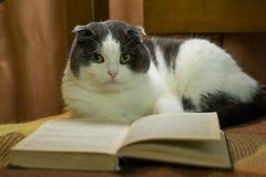 Katt med boken Arkivfoto