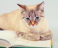 Katt med boken och exponeringsglas Arkivfoton