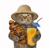 Katt med chokladbullen och fruktsaft royaltyfria foton