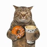 Katt med den orange munken och kaffe royaltyfri foto