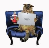 Katt med en bärbar dator på soffan royaltyfri fotografi