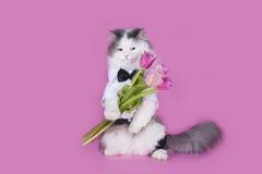 Katt med en bukett av rosa tulpan royaltyfri foto