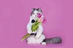Katt med en bukett av rosa tulpan fotografering för bildbyråer