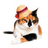 Katt med en hatt Arkivfoto