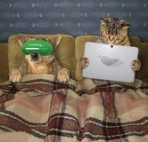 Katt med en hund i säng royaltyfri bild