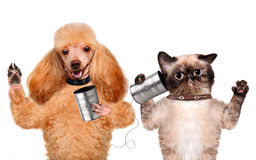 Katt med en hund på telefonen med en can Arkivfoton