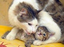 Katt med en kattunge arkivbilder