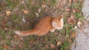 Katt med en kattunge på gräset i nedgången stock video