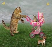 Katt med en pram och en hund fotografering för bildbyråer