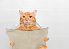 Katt med en tidning i en toalett royaltyfri bild