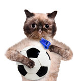 Katt med en vit fotbollboll Arkivbilder