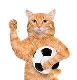 Katt med en vit fotbollboll Arkivfoto