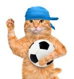Katt med en vit fotbollboll Arkivbild