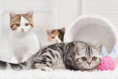 Katt med ett garnnystan Arkivbilder