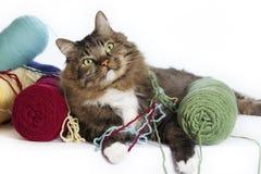 Katt med garn Arkivbild