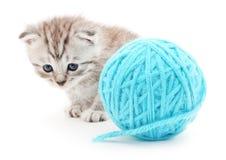 Katt med garnnystan Arkivbild