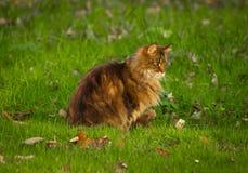 Katt med grön bakgrund Arkivfoto