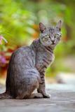 Katt med gröna ögon arkivfoton