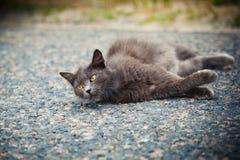 Katt med gula ögon Royaltyfria Bilder