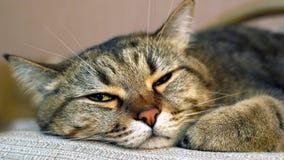 Katt med härliga guling-gräsplan ögon Royaltyfria Bilder