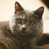 Katt med h?rliga ?gon t?tt upp royaltyfri foto