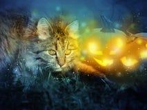 Katt med halloween pumpor Royaltyfri Bild