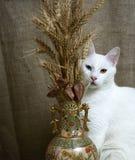 Katt med heterochromiairidumsammanträde bredvid en vas med vete Fotografering för Bildbyråer