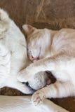 Katt med hunden Arkivbild