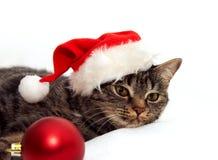 Katt med julbollen Arkivbild