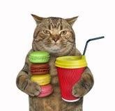 Katt med kaffe och bunten av kex royaltyfria foton