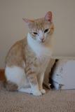 Katt med kartongen Arkivfoton