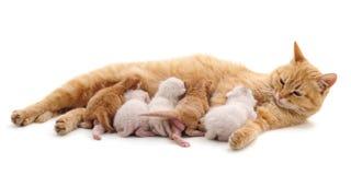 Katt med kattungar Royaltyfri Foto