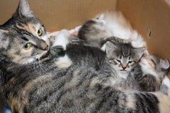 Katt med kattungar Arkivfoton