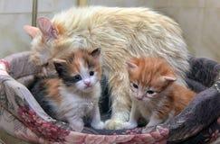 Katt med kattungar royaltyfri fotografi