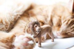 Katt med lejonleksaken Arkivbild