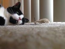 Katt med leksaken Royaltyfri Foto