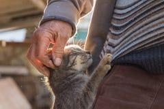Katt med mannen Royaltyfria Foton
