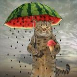 Katt med paraply 1 arkivfoto