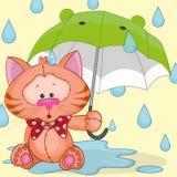 Katt med paraplyet Royaltyfri Foto