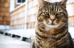 Katt med roligt uttryck royaltyfria foton