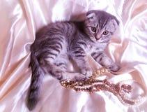 Katt med smycken Arkivfoton