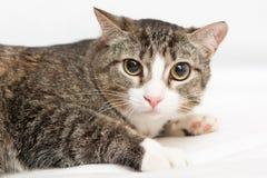 Katt med stora ögon på vit bakgrund Arkivfoto