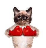 Katt med stora röda handskar Arkivfoto