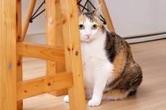 Katt med strimmig kattpälssammanträde bredvid trästol royaltyfria bilder