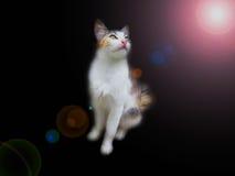 Katt med svart bakgrund Fotografering för Bildbyråer