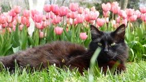 Katt med tulpan Arkivbild