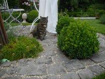 Katt mellan askar Arkivbilder