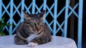 Katt mitt husdjur på tabellen Arkivfoto